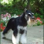 Callie; Retired