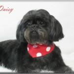 DaisyMay_24