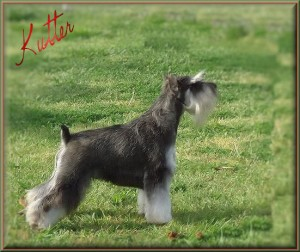 Kutter: SIRE to litter